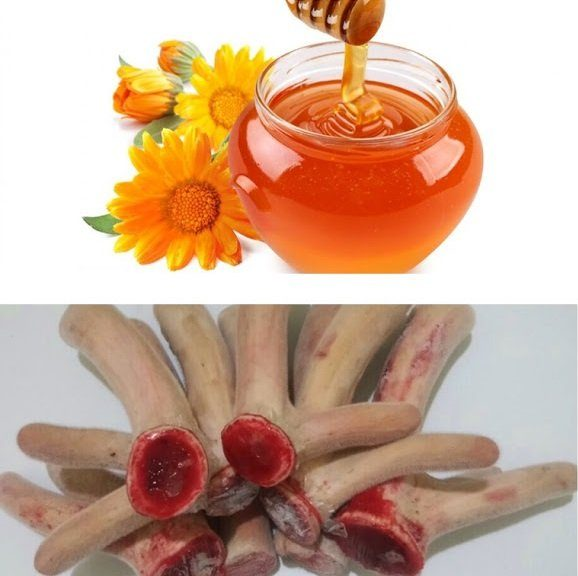 nhung hươu ngâm mật ong