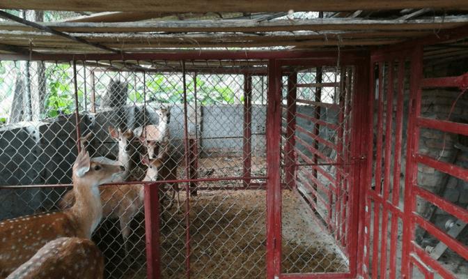 trang trại hươu