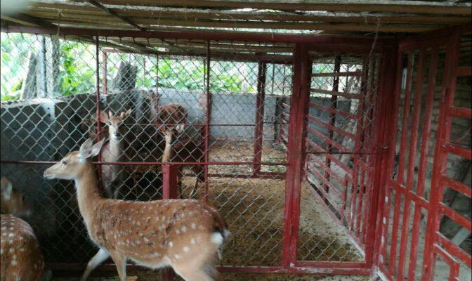 trang trại hươu tại Nhung Hươu Shop