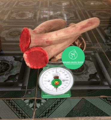 nhung hươu giúp tăng cân an toàn